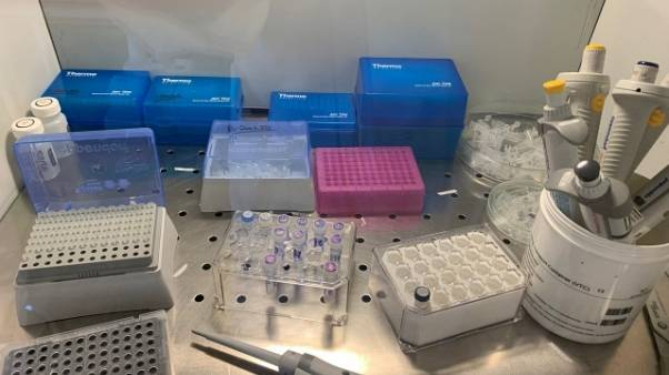 Coronavirus: altri cinque casi in Puglia