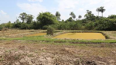 Côte d'Ivoire : la Banque africaine de développement relance l'important projet aquacole de Dompleu, dans l'ouest du pays