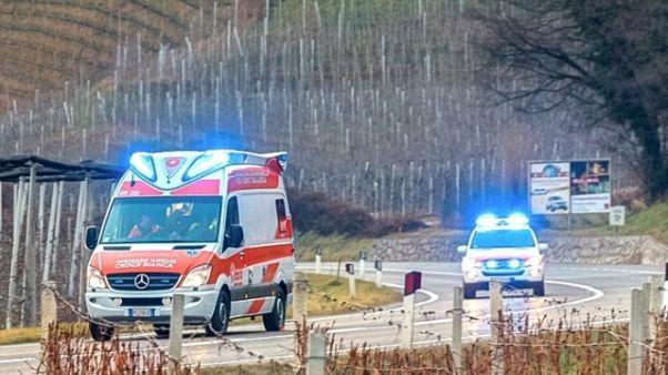 Muore travolto da albero in Alto Adige
