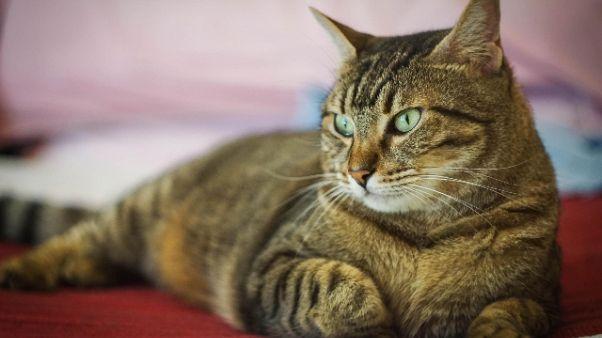 Coronavirus: a Vo' parte test su gatti