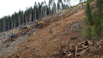 Alto Adige ok 80% boschi colpiti da Vaia