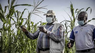 Coronavirus - Africa: Food and Agriculture Organization (FAO) launches the new COVID-19 Response and Recovery Programme outlining seven key priority areas