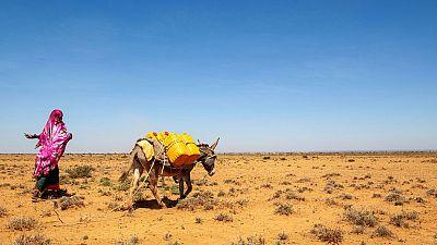 Coronavirus - Somalia: Frontline resilience in Somalia
