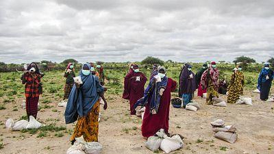 Coronavirus - Afrique : La coalition mondiale menée par la Organisation des Nations Unies pour l'alimentation et l'agriculture (FAO) en faveur de l'alimentation dans le contexte du COVID-19 gagne du terrain