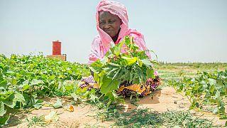 La COVID-19 augmente le gaspillage d'aliments frais dans les pays à faible revenue