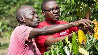 Journée Internationale du café : Nestlé veut dynamiser la production de café en Afrique