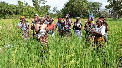 Bénin : un projet financé par la Banque africaine de développement permet une hausse significative des rendements agricoles et revenus des exploitants