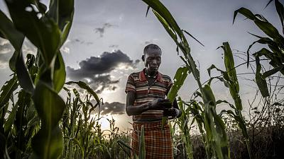 Food and Agriculture Organization of the United Nations (FAO) aims to provide livelihood assistance to nearly 49 million people in 2021