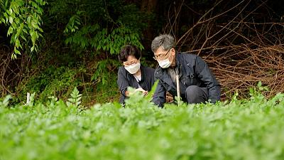 'That's my story': Oscar winner thrills South Korean minari farmers
