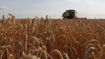 Cosecha granos Ucrania podría subir a 70,7 millones toneladas en 2021, dice instituto local