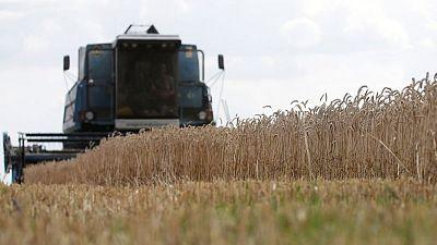 Exportaciones granos de Ucrania caen 24,2% en lo q va de campaña 2020/21
