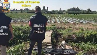 Sequestrata nel milanese azienda agricola del valore di 7.5 mln