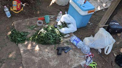 La Polizia ha sequestrato 310 chili già pronti e cento piante