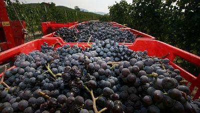 Export vini Toscana contraffatti. Perquisiti italiani e cinesi