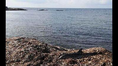 Sospinto a riva dalle mareggiate
