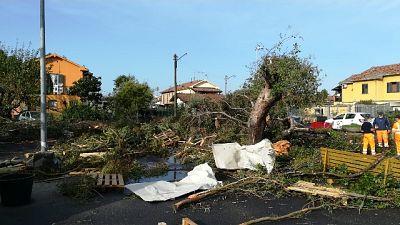 Decine gli alberi abbattuti dalla furia del vento
