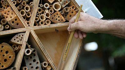 Las abejas solitarias de Colombia se toman un respiro en hoteles de bambú