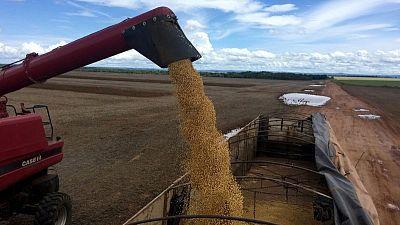 Espías, satélites y abogados: compradores de soja aprietan a los agricultores brasileños