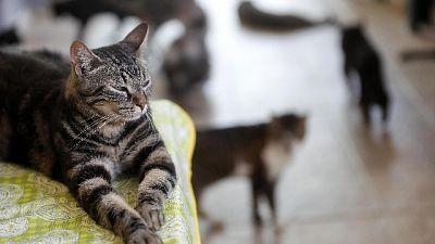In Maremma, pronte a denuncia per maltrattamento animali