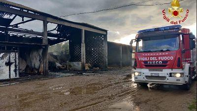 In salvo altri 50 bovini, le fiamme ad Arborea nell'Oristanese