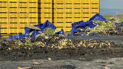 Distrutti oltre 3.000 cassoni per la raccolta degli ortaggi