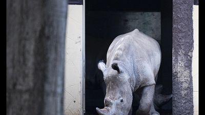 Fa parte programma di salvaguardia specie a rischio estinzione