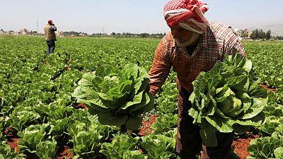 لبنانيون يخشون تلف الفاكهة والخضر بعد الحظر السعودي