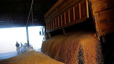 Futuros del maíz caen tras repunte sesión previa; la soja sube