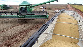 Productores de Brasil comprometen 25% de futura cosecha de soja, fuerte baja frente a 2020