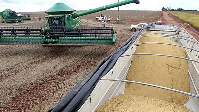 Brasil vende a EEUU el mayor volumen de soja desde 2014: datos navieros