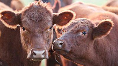 Argentina cierra exportación carne por un mes a raíz de fuerte alza en precios internos, define medidas