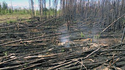 """Los incendios """"zombis"""" que resisten el invierno pueden volverse más comunes por el cambio climático"""