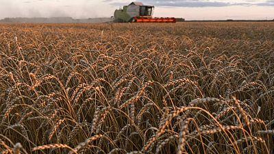 إنترفاكس: صادرات الحبوب الروسية قد تبلغ 51 مليون طن في 2021\22