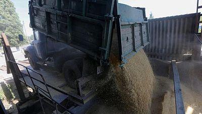 Existencias de granos de Ucrania alcanzan 9,5 million toneladas a comienzos de mayo