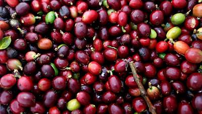 Importador de café estadounidense ve retrasos de hasta 5 semanas en cargamentos desde Colombia