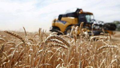 خبير: روسيا ربما تورد للجزائر ما يصل إلى مليون طن من القمح في الموسم الجديد