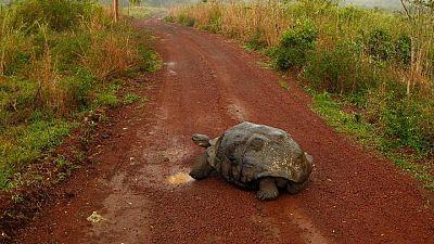 Ecuador confirma la existencia de tortuga que se creía extinta hace 100 años en Galápagos