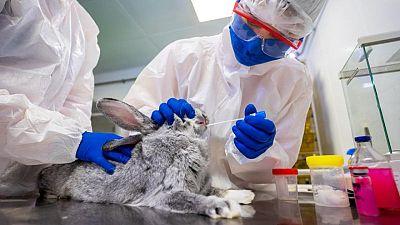 Regiones rusas comienzan a vacunar animales contra COVID-19: RIA