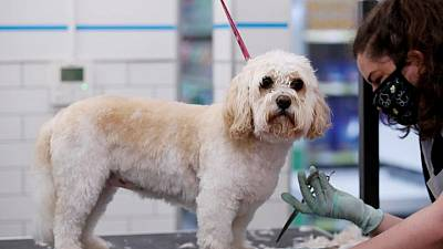 UK's Pets At Home sees higher profit on lockdown pet adoptions boost