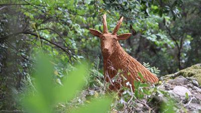 Tutti a 'caccia' di splendide creature di legno intagliato