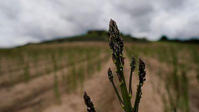 La UE interrumpe sin acuerdo las conversaciones sobre las reformas de los subsidios agrícolas
