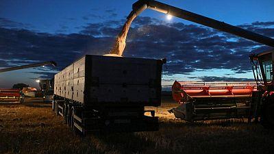 Sector ganadero de China busca aprovechar la cosecha de trigo para alimentar cerdos y aves