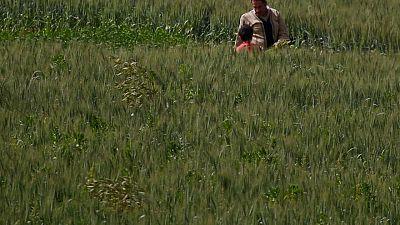 وزارة التموين: مصر اشترت 3.2 مليون طن من القمح المحلي