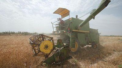 العراق يشتري أكثر من مليوني طن من القمح المحلي منذ بداية موسم الحصاد