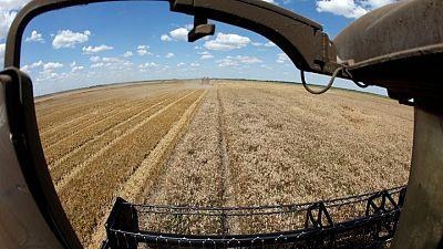 متعاملون: الجزائر تشتري 200 ألف طن على الأقل من القمح الصلد