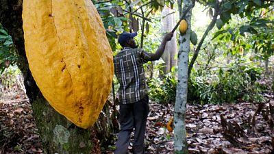 ICCO prevé un superávit mundial de cacao de 165.000 toneladas en 2020/21