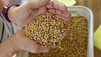 GRANOS-Soja y maíz caen en Chicago, operadores miran al clima en EEUU