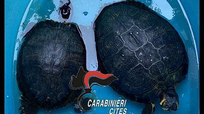 Scoperto dai Carabinieri, erano in un recipiente di plastica