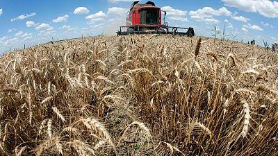 متعاملون: يعتقد أن تونس اشترت نحو 50 ألف طن من القمح في مناقصة