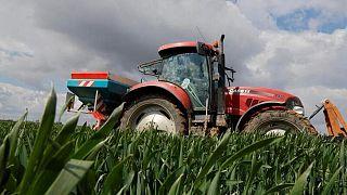 Cultivos de trigo en Francia presentan problemas de calidad luego de lluvia excesiva: grupo
